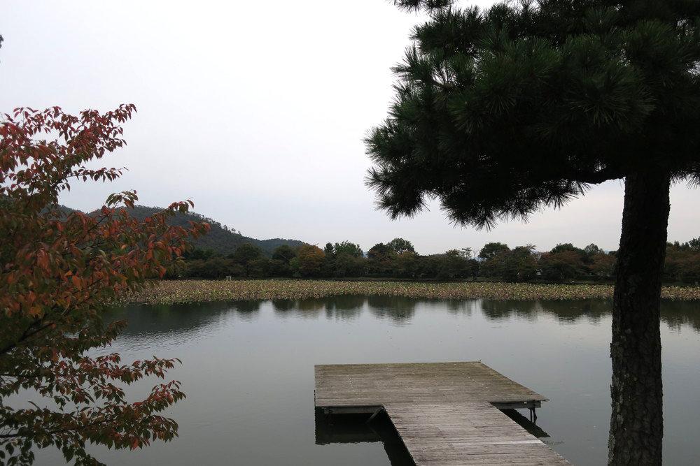観月台から大沢池を望む