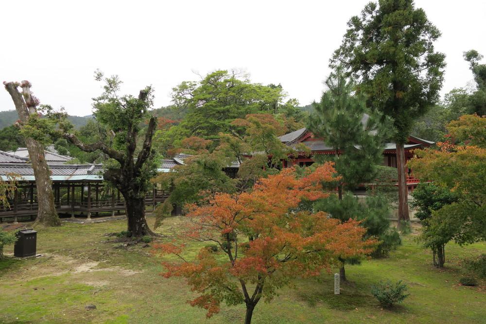 村雨の廊下からの景色