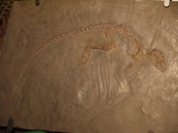始新世中期の哺乳類レプティクティディウム