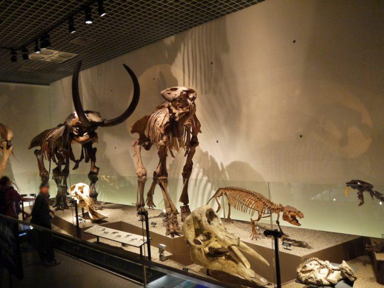 古代の象たち