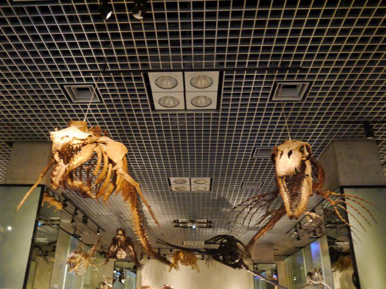 ティロサウルスとバシロサウルス
