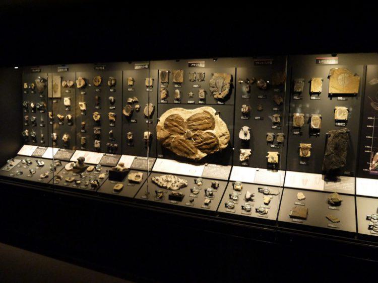三葉虫の化石の数々