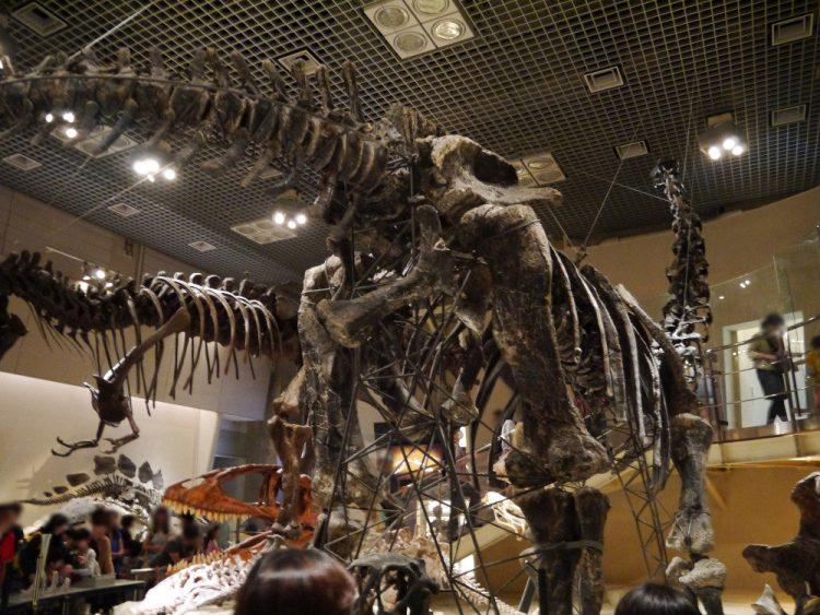 アパトサウルスの体