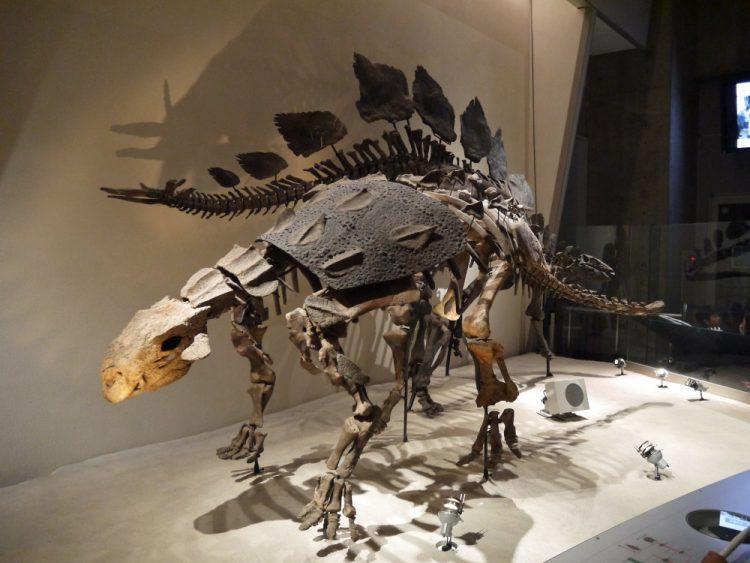 スコロサウルス