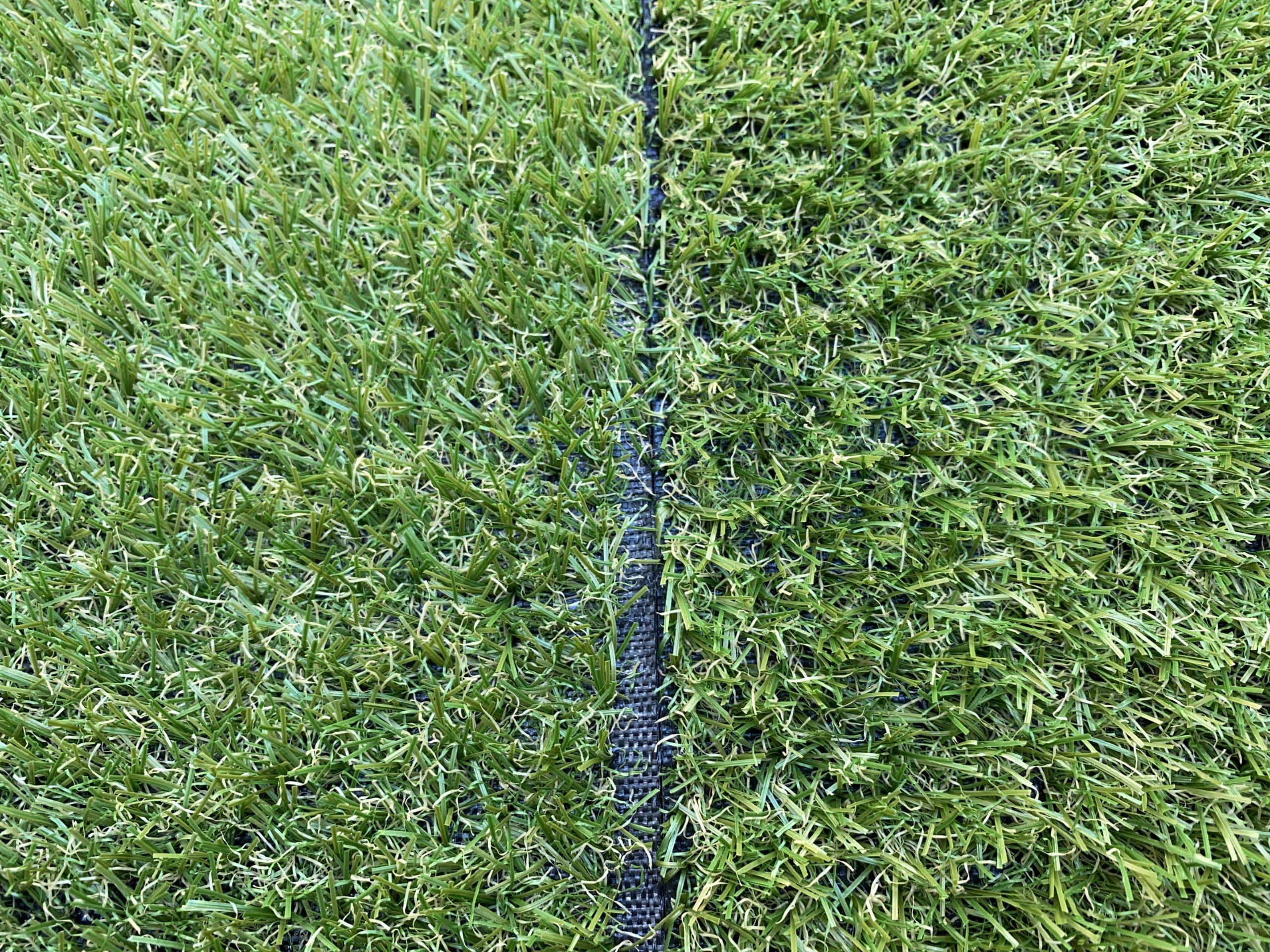 左の芝の方が白っぽい
