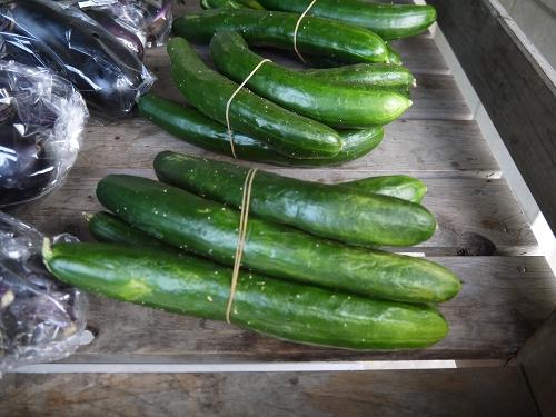 野菜の無人販売所 きゅうり